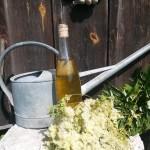 veinipudel
